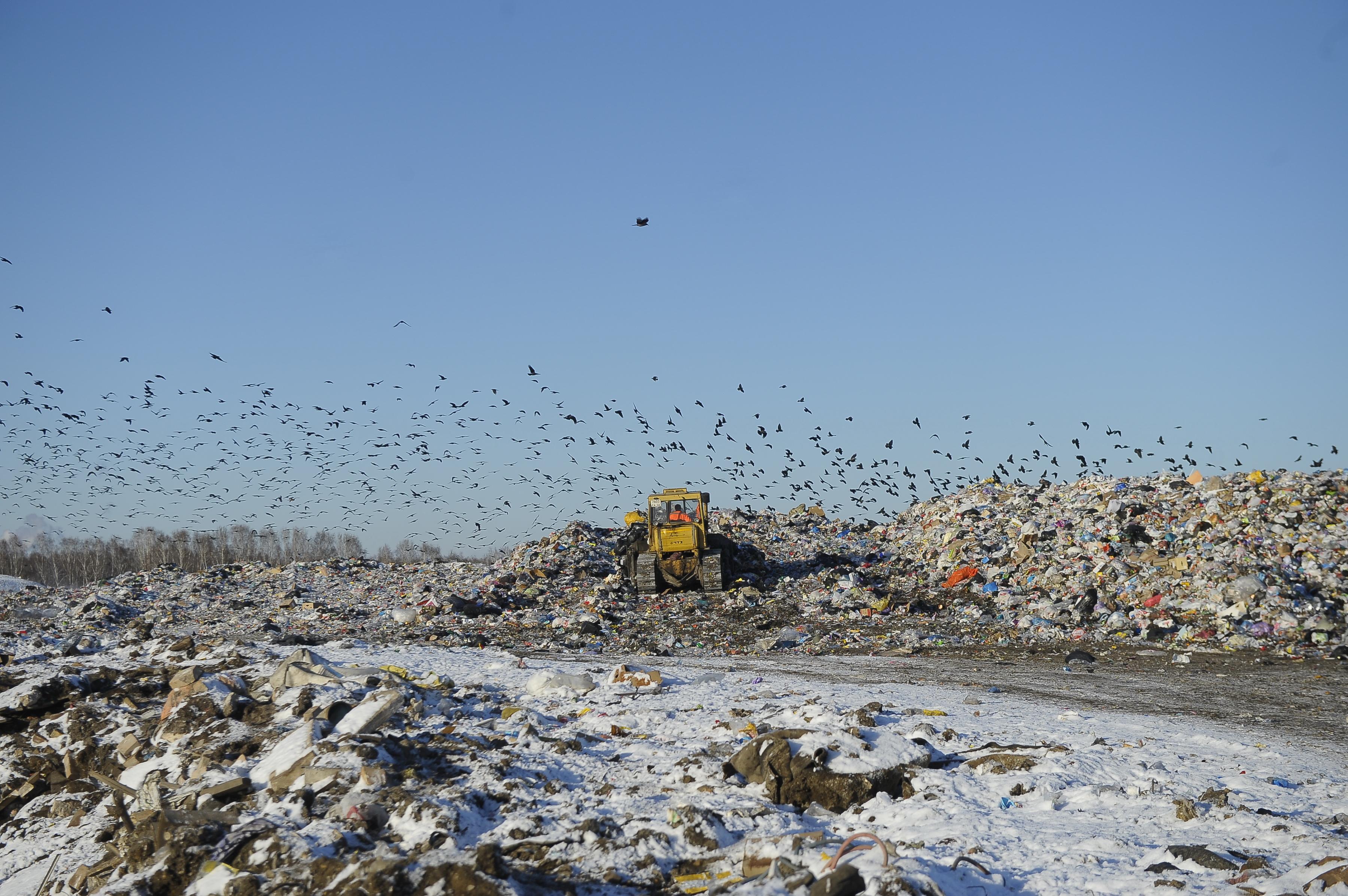 полигон для мусора картинка составе блюда практически
